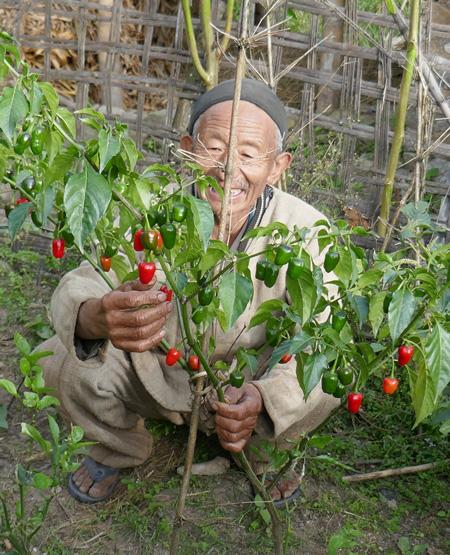 Nepali Farmer