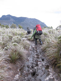 A typical piece of Tassie walking track