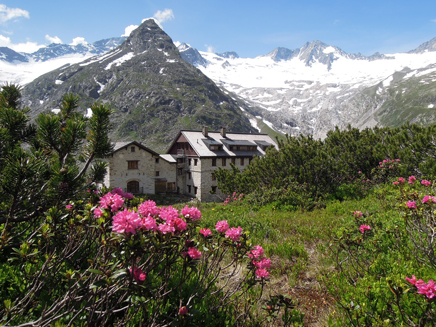 Berliner Hutte - One of Austria's grand mountain huts with the Alpen Rose in bloom.